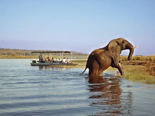 elephant on a South Africa Safari Tour