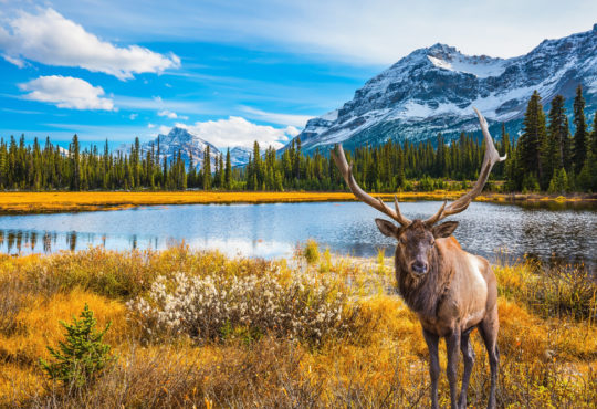 Canadian landscape with mountains, lake and stag