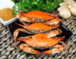 Visit Salcombe Crab Festival